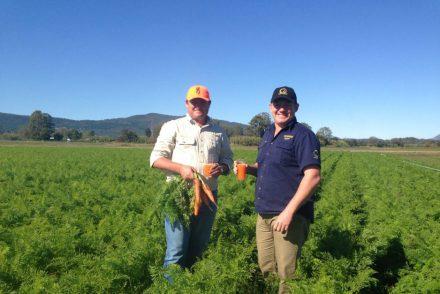 En Australie, une bière avec 16% de jus de carotte à l'intérieur