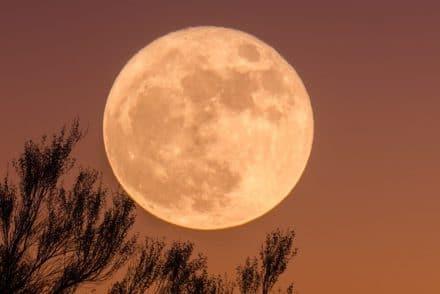 Brasserie de la Pleine Lune, bières pour houblonniers mal lunés