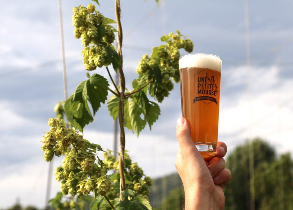 Houblon, responsable de l'amertume dans la bière